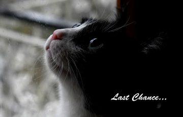 animal-3890385_1920